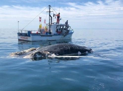 кит возле корабля
