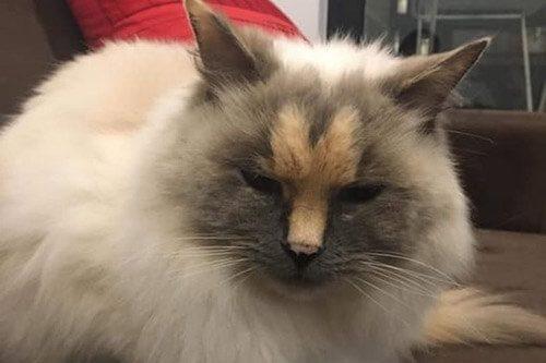 кот с носом
