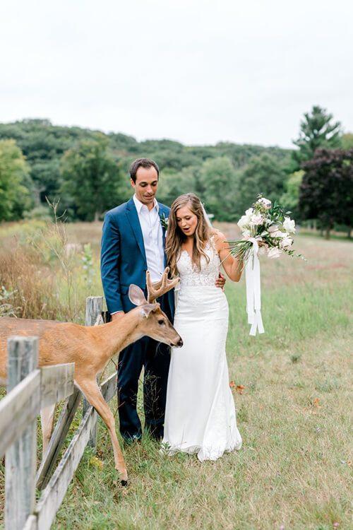 Олень на свадьбе