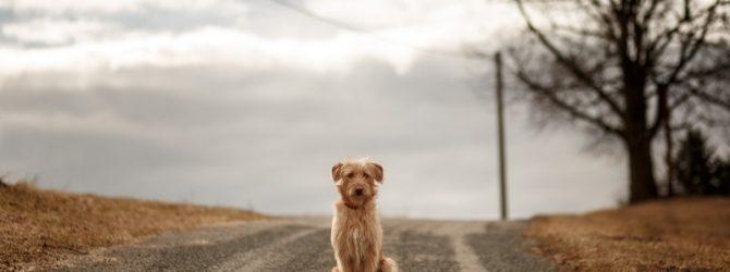 пёс на дороге