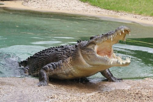крокодил у космоната