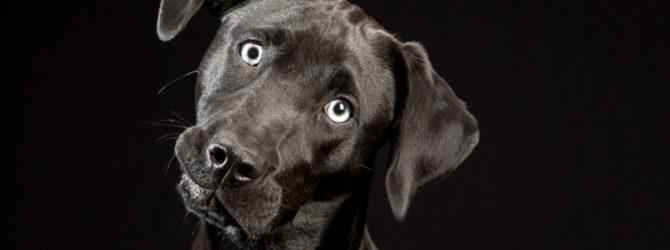 черная собака и книга