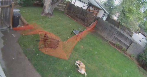 собака упала
