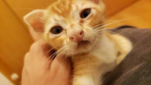 кот с большим носом
