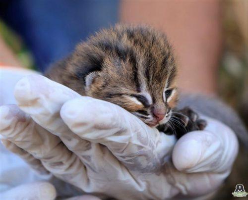 ржавый котёнок