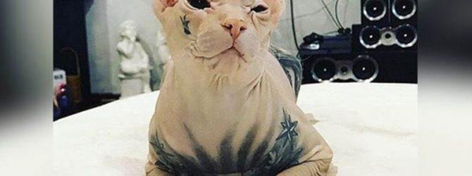 кот с татуировками