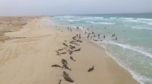 дельфины выбросились