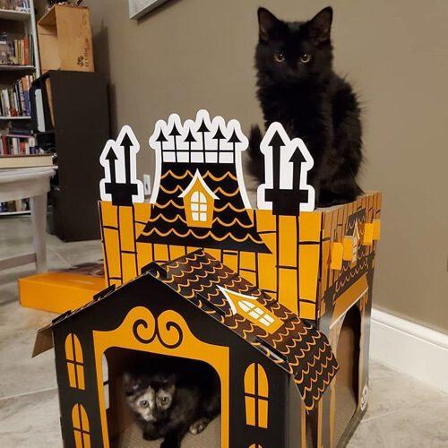 коробка для кошки