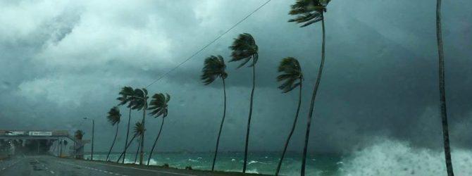 ураган дориан собака