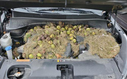 орехи под капотом