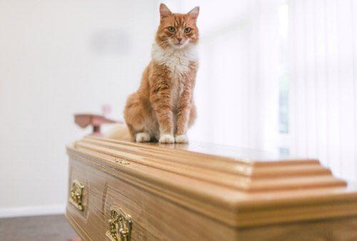кот в похоронном бюро