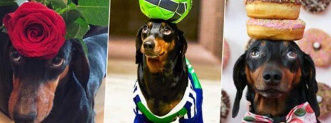 собака с предметами на голове