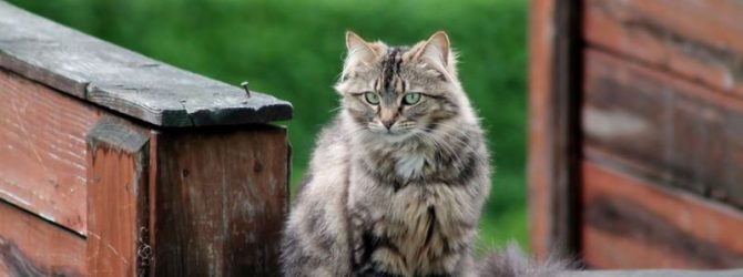кошка на крыльце