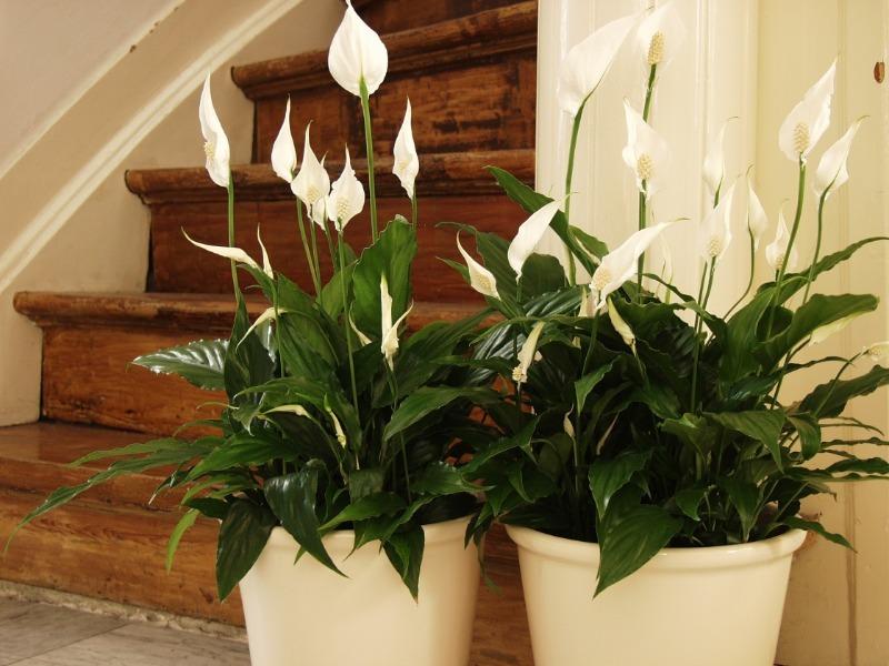 Приметы связанные с комнатными растениями